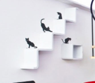 cat on shelving